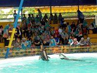 Melihat Pertunjukan Lumba-lumba di Suncity Waterpark Madiun